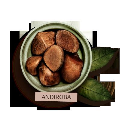 Soins du corps Ekos Andiroba